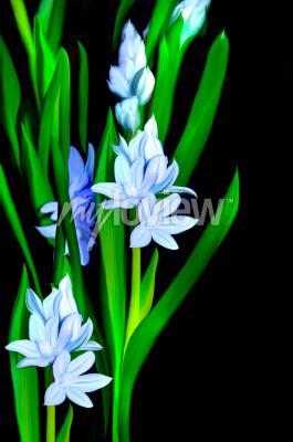 Фотообои Lazurowe Kwiaty
