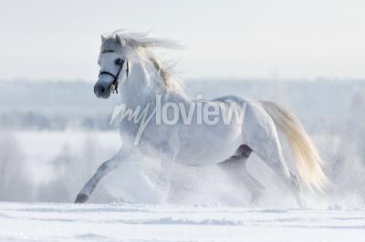 Фотообои BIALY Kon galopuje ш ш zimie Полу