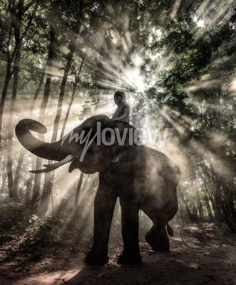 Картина Махоут в провинции Сурин Тайский слон