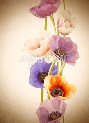Фотообои Свежие красочные цветы мака