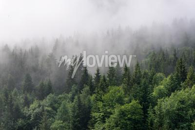 Фотообои Обзор Evergreen Forest