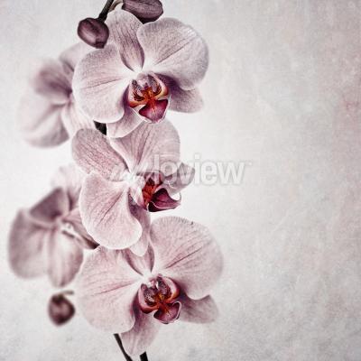 Фотообои Нежная розовая орхидея на выцветшем фоне винтажного стиля