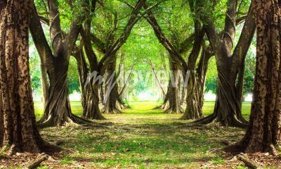 Фотообои Волшебный лес зеленый