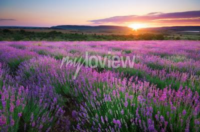 Фотообои Meadow of lavender