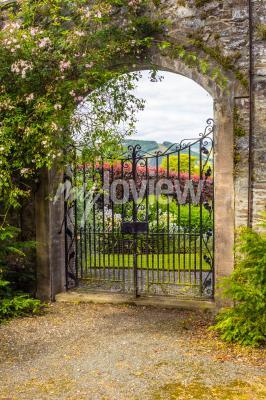 Фотообои Beautiful old garden gate covered with green ivy